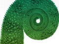 Suse-What's the Cameleon say?