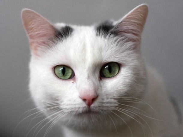 Katzenvideos alleine reichen für eine Social Media Strategie meist nicht aus. Quelle: M. Schindler