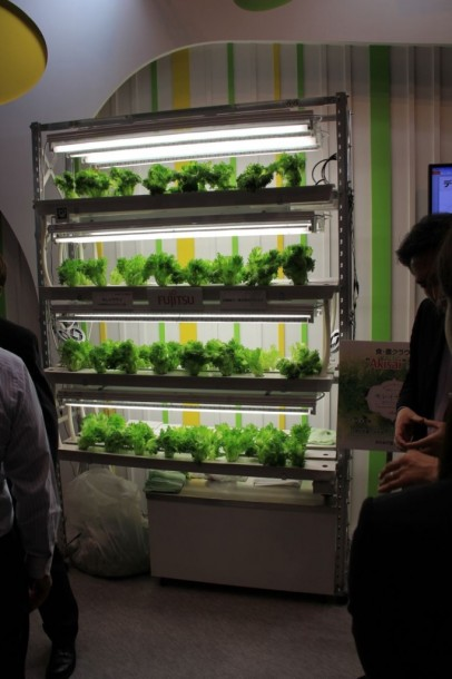 Fujitsu-high-tech-lettuces
