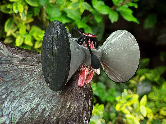 Hühner sollen sich mit Second Livestock wie in Freiheit fühlen. (Bild: Austin Stewart/Second Livestock)