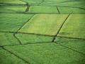Digital Farming als gelungene Erweiterung eines traditionellen Gewerbes mit Digtialisierung und Industrie 4.0. (Bild: Schutterstock)