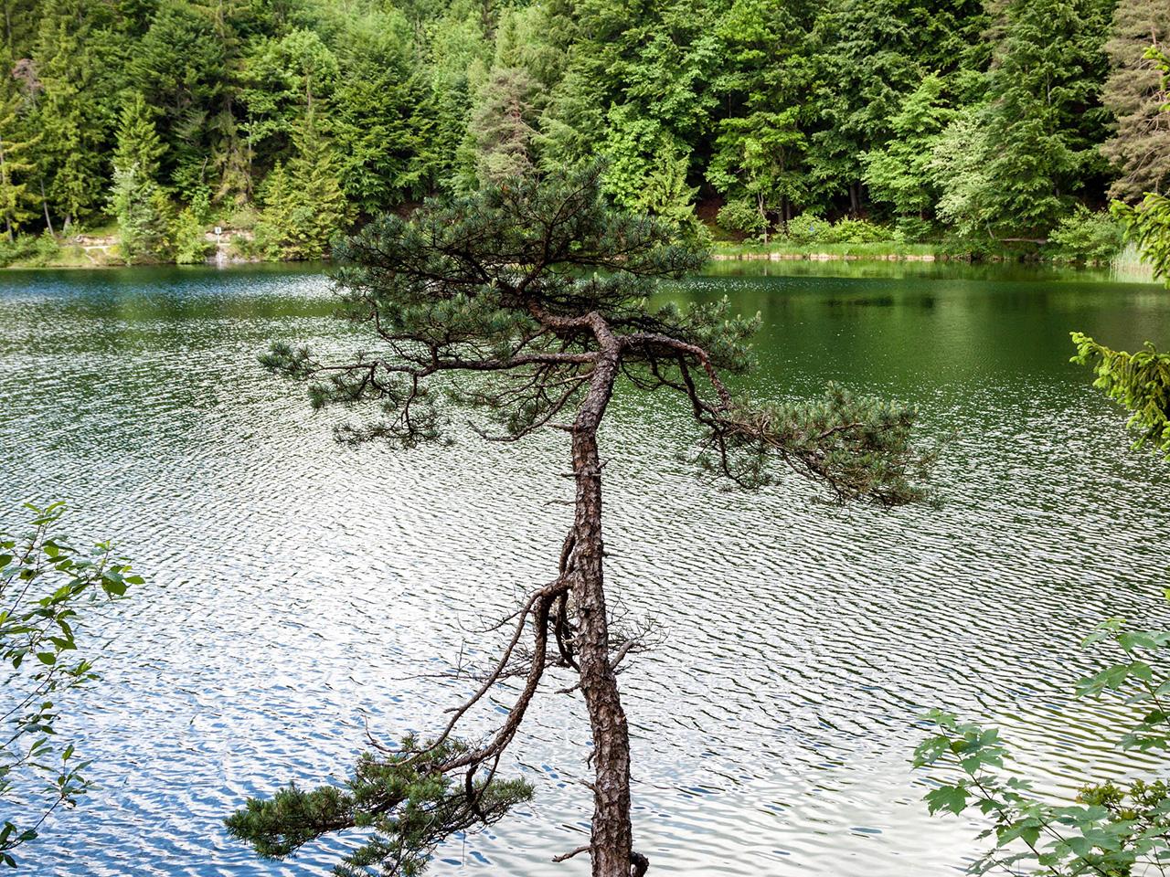 Baum. (Bild: Andre Borbe/silicon.de)