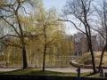 Baum vor dem Reichstag. (Bild: Andre Borbe/silicon.de)