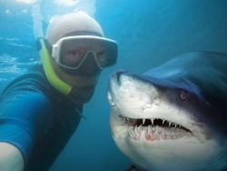 Selfie mit Hai (Bild: Shutterstock)
